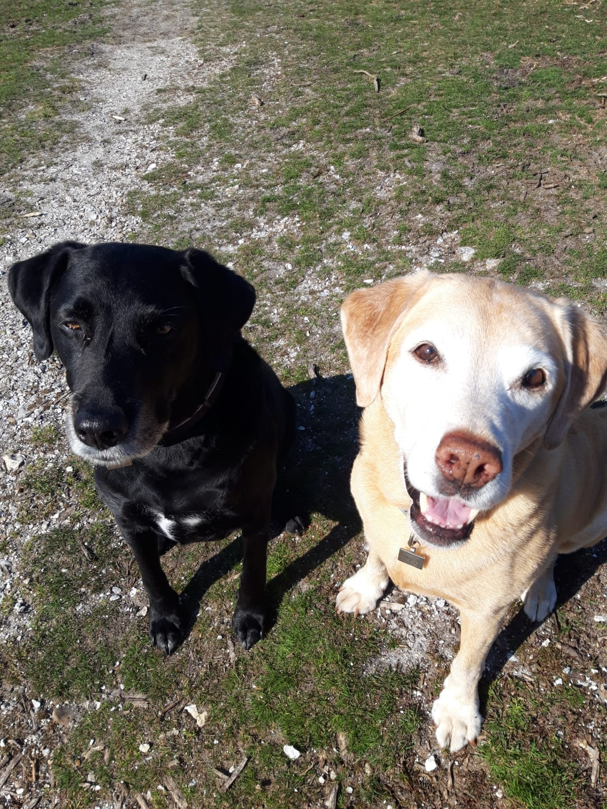 Henry and Ozzie Bell Herbs Dogs